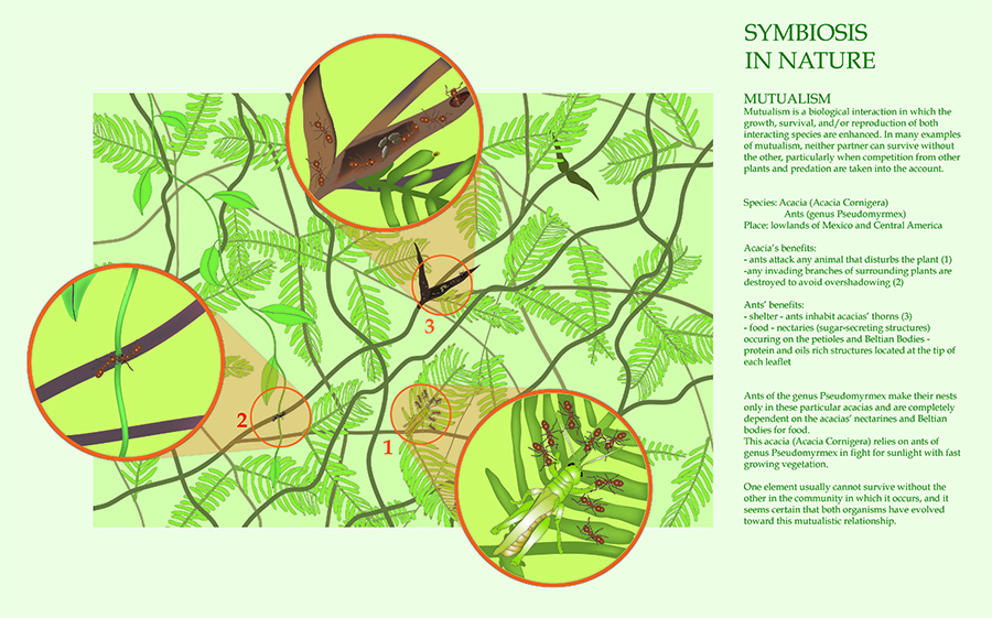 Symbiosis in Nature